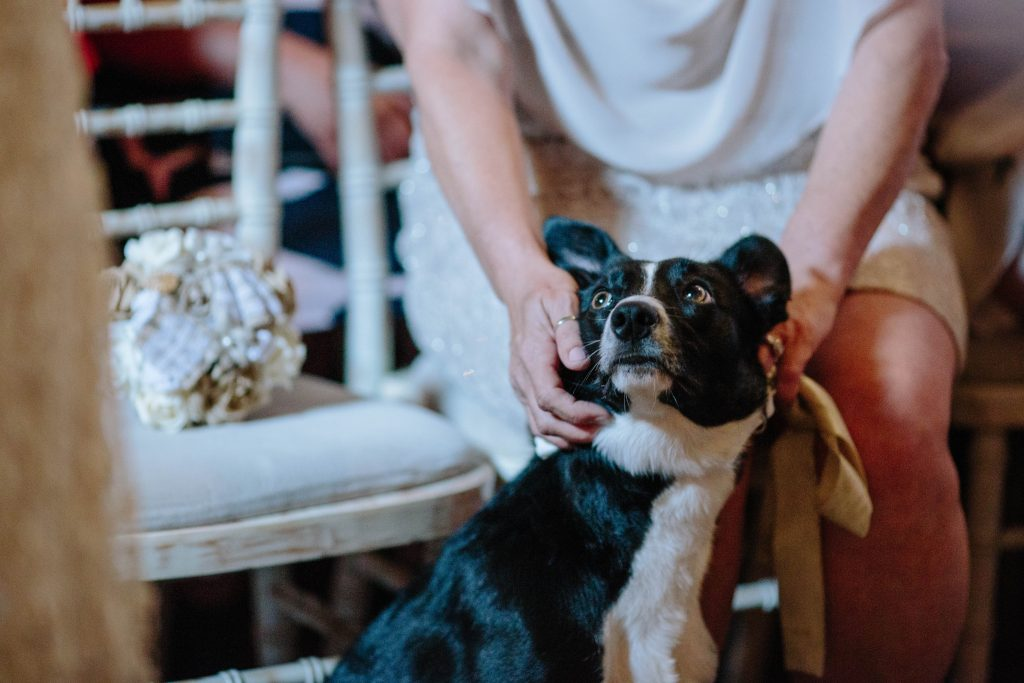 Dog sitting at the front of the wedding ceremony